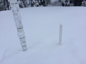 100cm of settled snow at low elevation.
