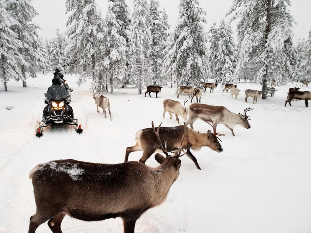 eSled electric snowmobile and reindeer